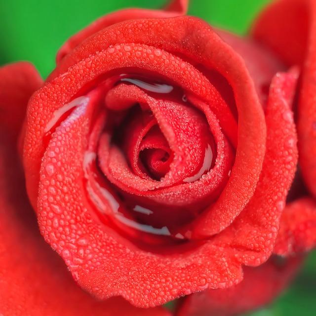 Idrolato di rosa